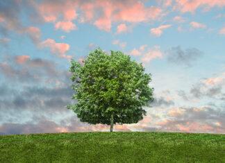Czy warto dbać o środowisko