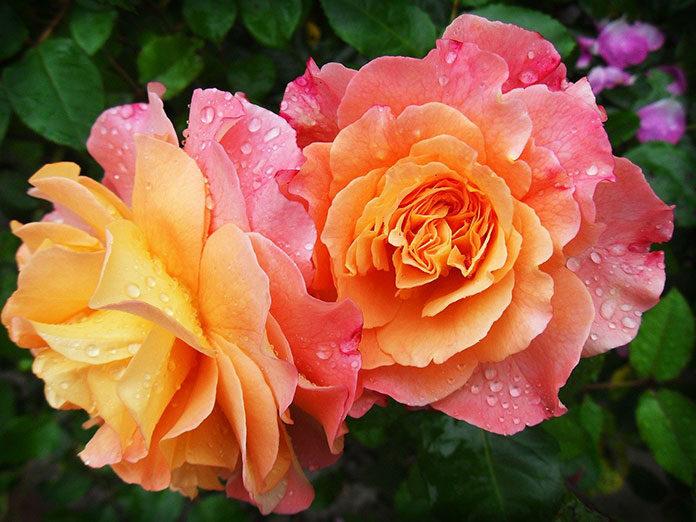 Jak urządzić ogród na tarasie czyli jakie kwiaty na taras wybrać