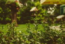 Planowanie ogrodu